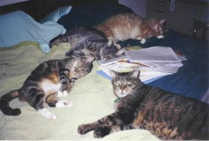 Rhea White's Cats Dashiel, Grayem, Scampers and Strider